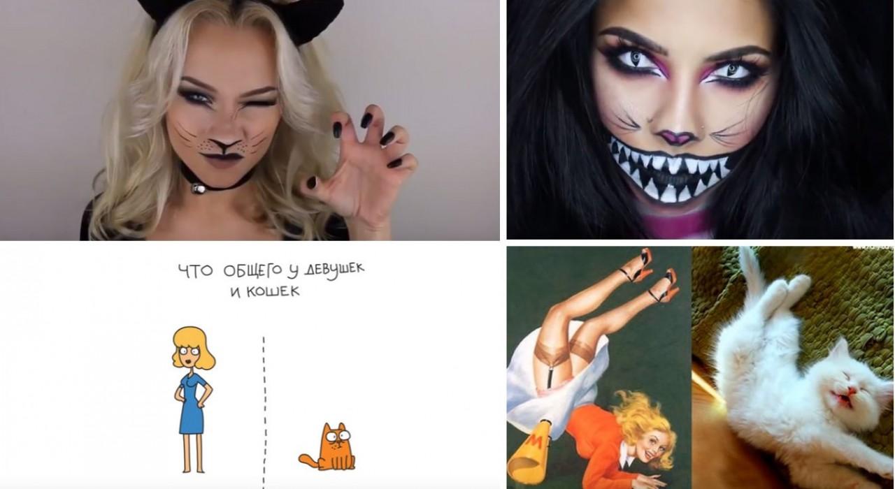 Все женщины-кошки! Три видео…