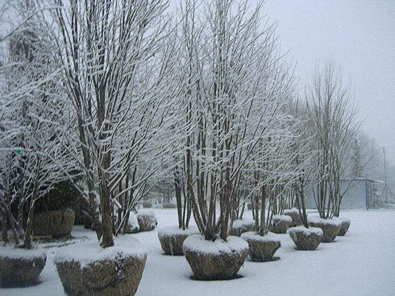 Попробуйте посадить дерево зимой