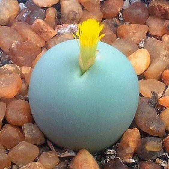 """25 голых растений, прикрывающихся лишь цветами """"голые"""", интересное, красота, природа, растения, факты"""