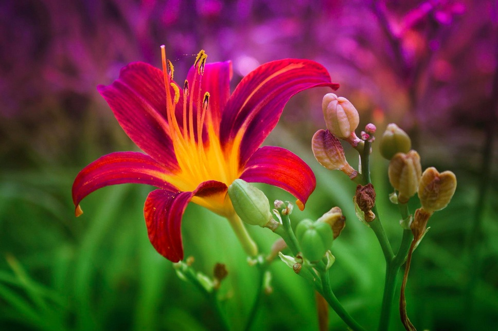 most beautiful flowers - 600×399