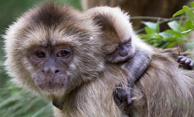 Женщину в детстве забыли в лесу и она осталась там на 5 лет: жила с обезьянами и стала понимать язык Культура