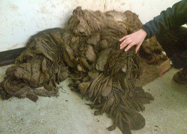 Этих собак нашли в ужаснейше…
