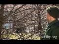 """Урок из видеокурса """"Обрезка плодовых деревьев"""""""