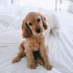 Как не подпускать собаку к мебели?Собакам тоже нравится мебель. Некоторые...
