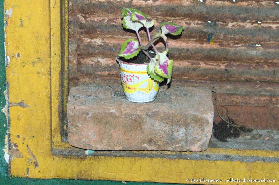 Мапепа. Девочка, которая живет в холодильнике