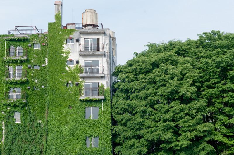 Утопающие в зелени: здания и сооружения