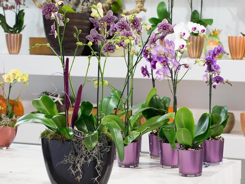 Секреты размножения орхидеи: как одно растение превратить в 100