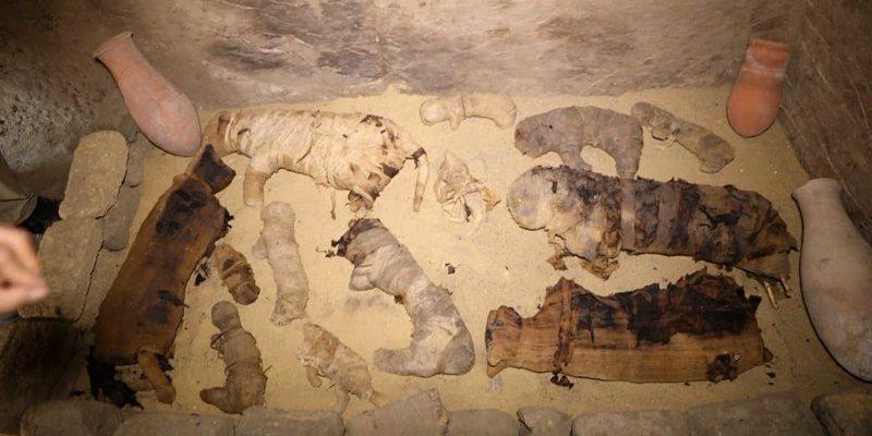 В Египте нашли редкие мумии кошек и скарабеев в 7 гробницах возле пирамид