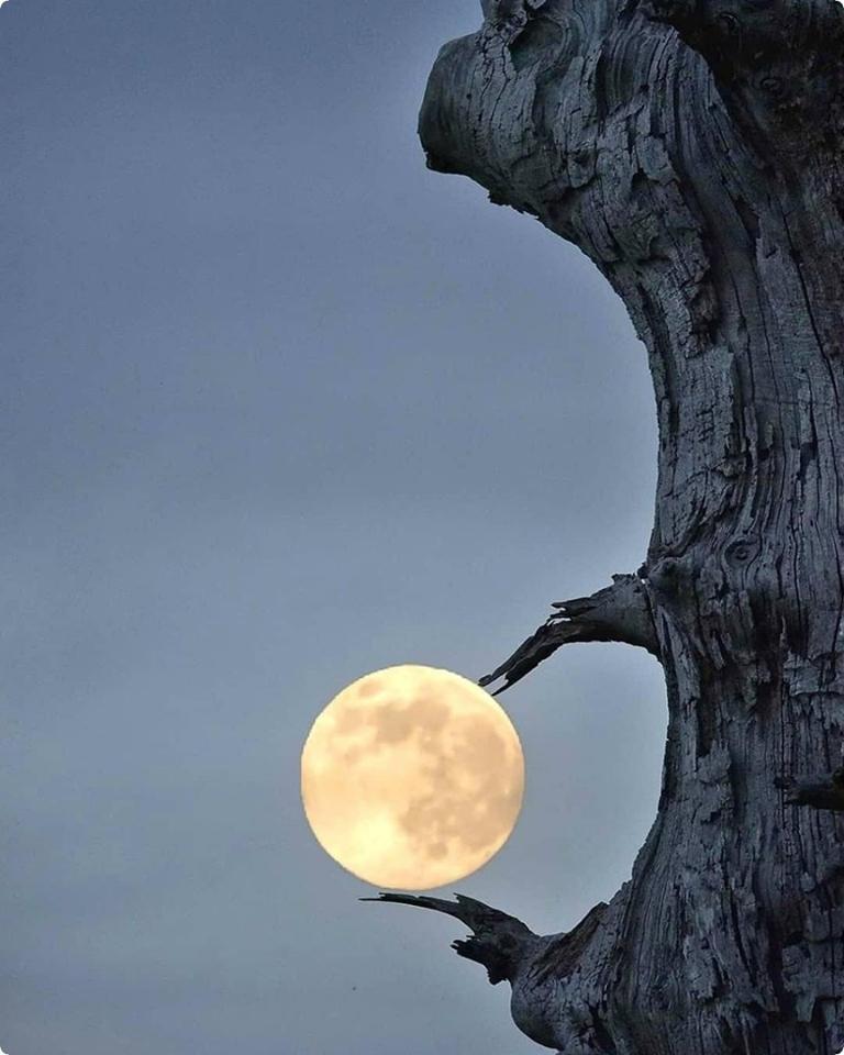 21 января лунное затмение во Льве .