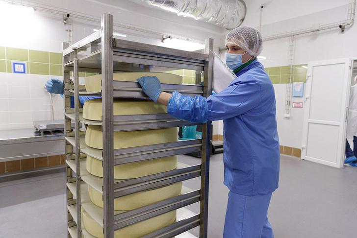 В Тульской области запустили производство контейнеров для созревания сыра