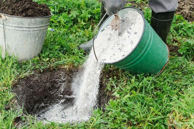 Как не допустить ошибок при посадке деревьев и кустарников