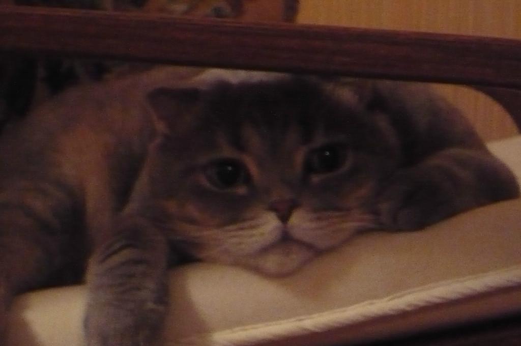 Вчера умер наш кот