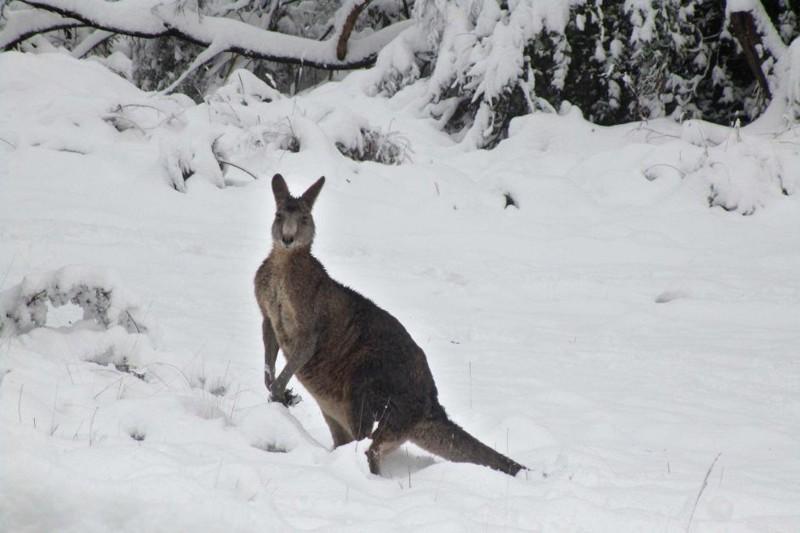 Привычная нам зима в непривычных местах зима, мир, снег, юмор