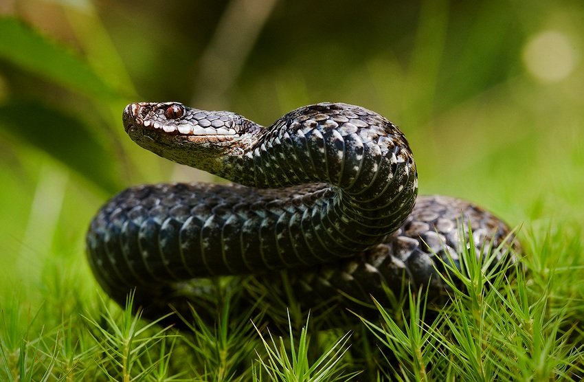 Что делать, если вас укусила змея! Как убрать невидимое окно в центре монитора