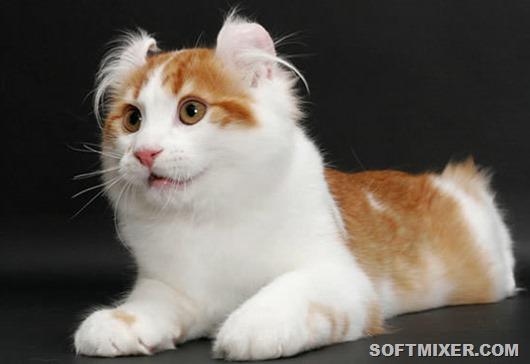 Самые удивительные породы кошек