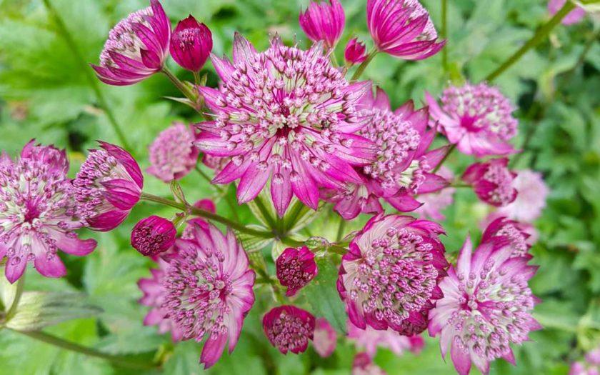 растения для сада в природном стиле