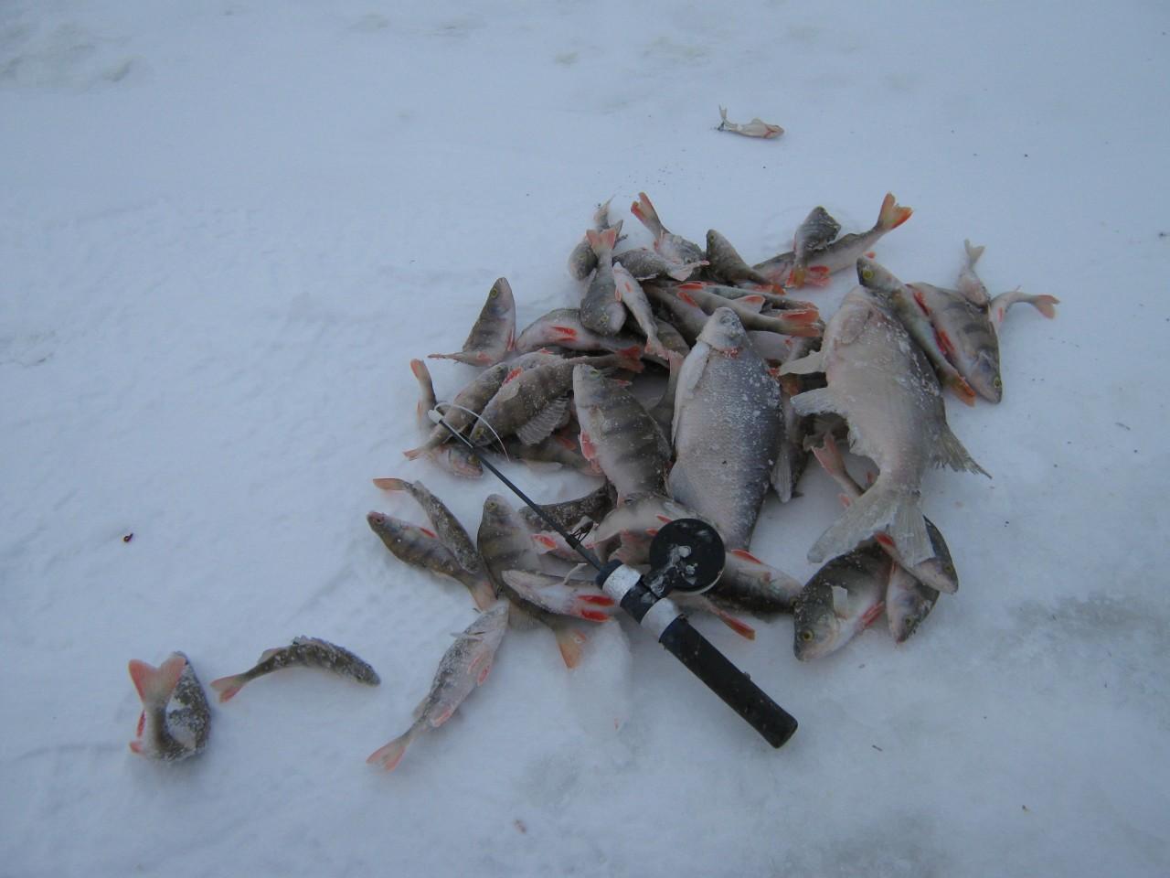 Прогноз клёва рыбы в городе Пермь