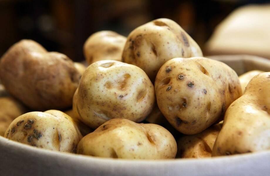 Зачем ученые заставили кусты картофеля светиться дача,наука,сад и огород