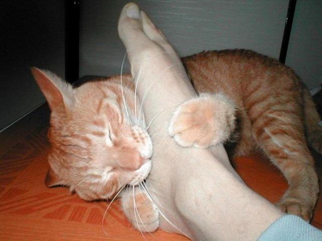 Почему кот кусается, что делать
