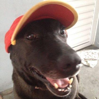 Брошенный на заправке пёс нашёл новых хозяев, дом и настоящую работу