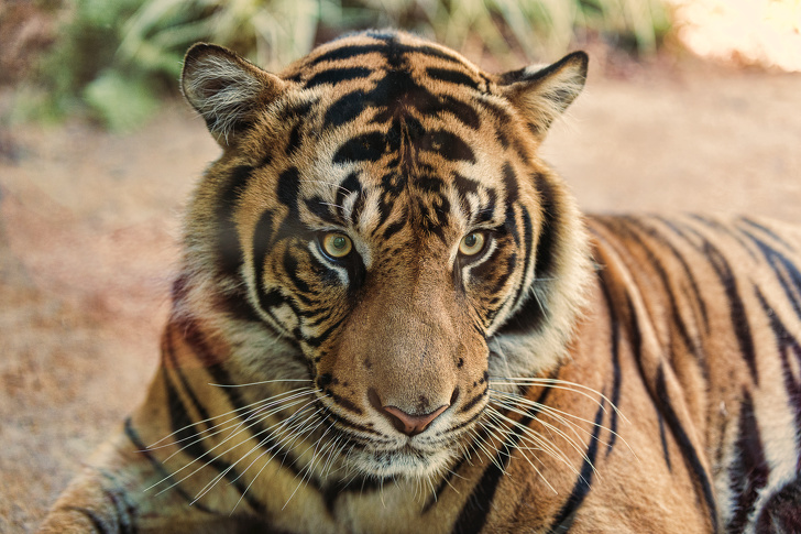 20 фактов из жизни животных, о которых нам не рассказывали в школе