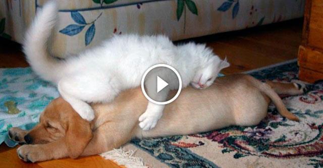 Кошки, которые так сильно об…