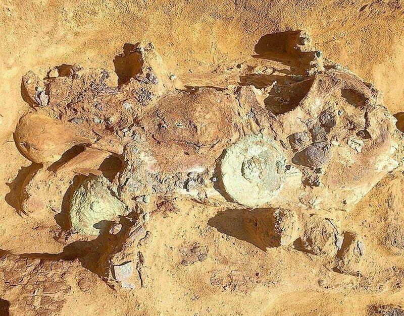Примечательно, что на черепе животного осталась упряжь, богато украшенная серебром и бронзой Астрахань, Сармат, археология, драгоценность, захоронение, находка, россия