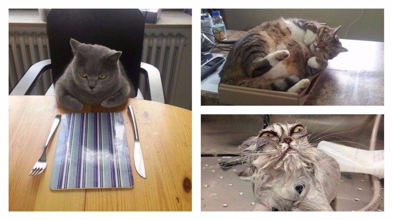 Кошки правят миром - и этим всё сказано