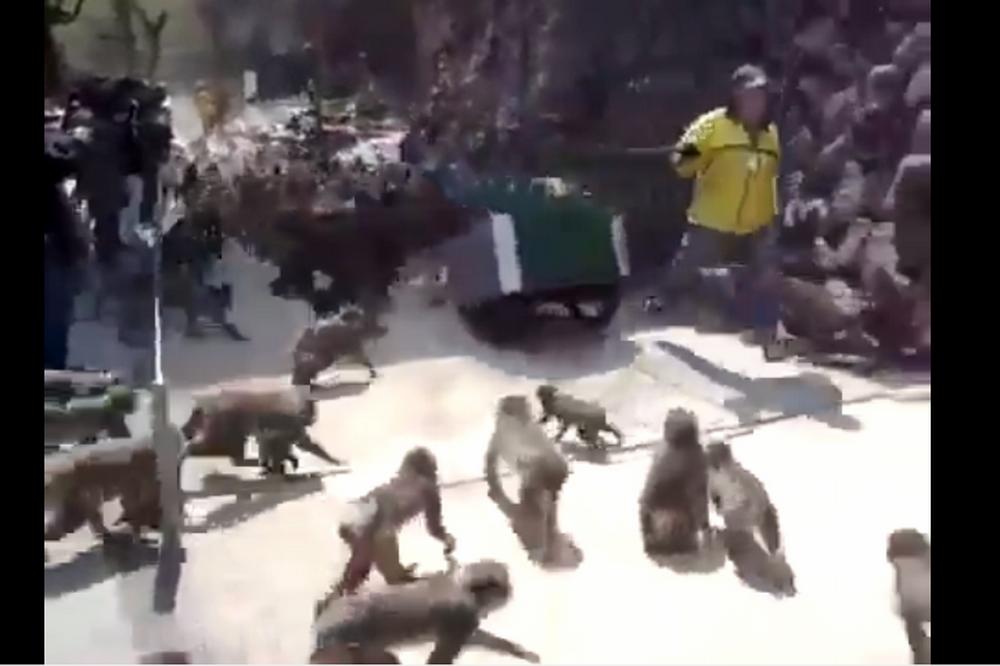 Нашествие обезьян!!!