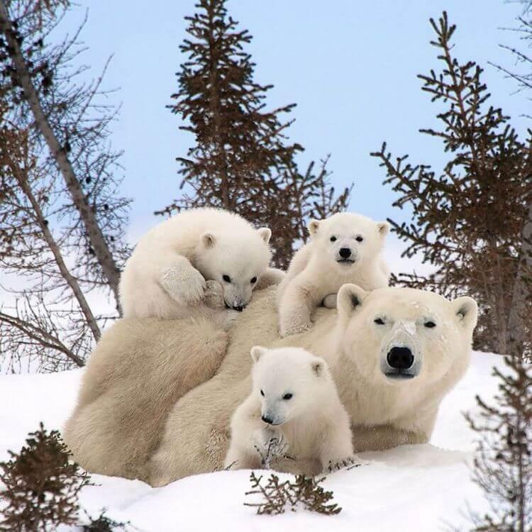 Картинка счастливая семья животных