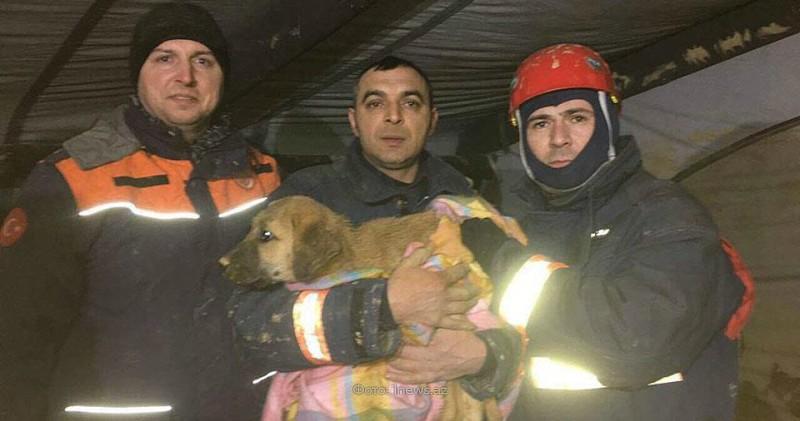 Турецкие спасатели 10 дней доставали щенка из колодца собака, спасение