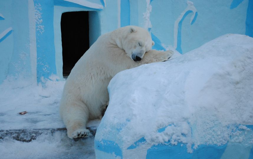 Сибирские морозы подкосили горожан