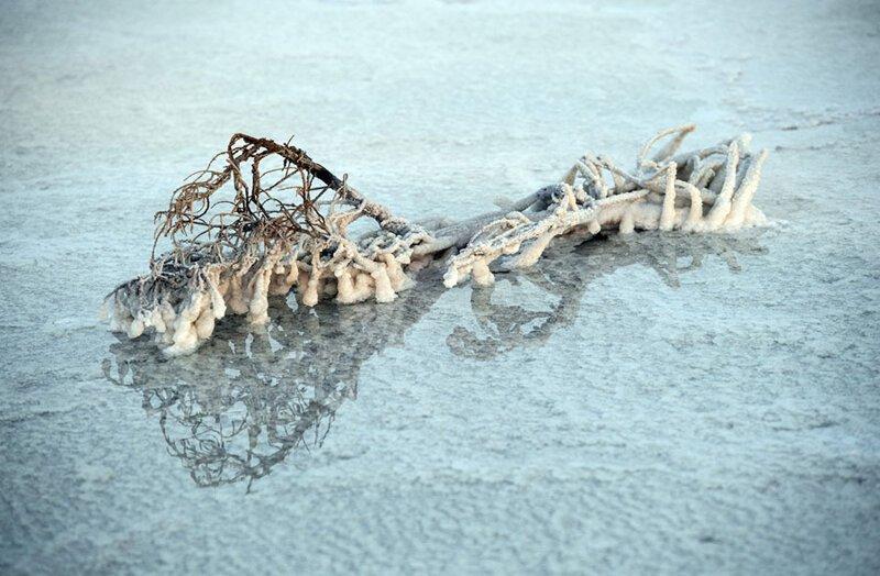 Покрытая солью ветка на поверхности озера. Фото: Карл Корт (Carl Court: Getty) безжизненное место, вулканы, интересное, фотографии