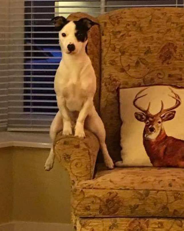 16. Это точно собака? домашние животные, домашние животные.собака, забавные собаки, пес, смешные фото, собаки, фото собак, юмор
