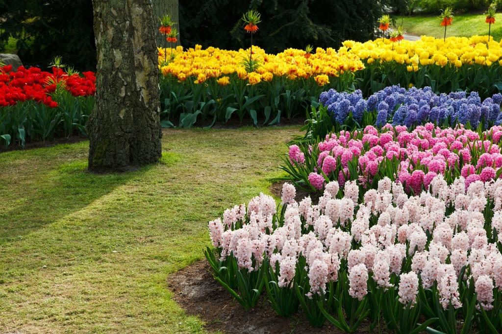 Красиво посадить тюльпаны на участке схемы фото