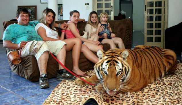 Любитель животных поселил в своем доме семь тигров
