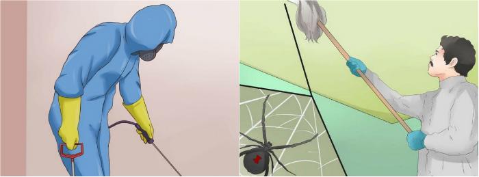 как вывести пауков из дома