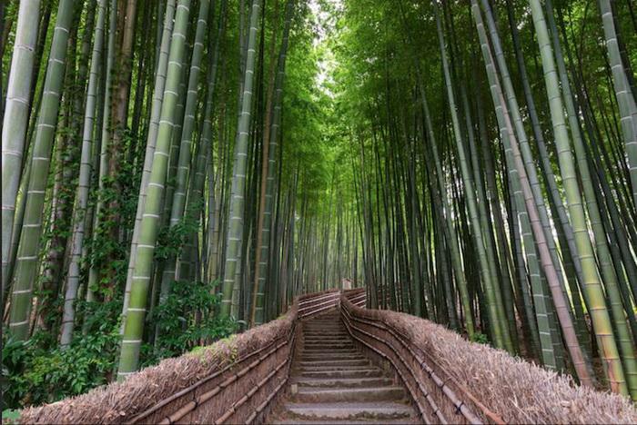 Бамбуковый тоннель в Киото.