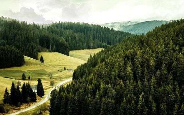 Россия, лес