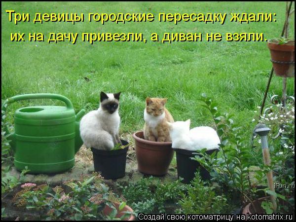 https://mtdata.ru/u2/photoCD6A/20395475335-0/original.jpg#20395475335