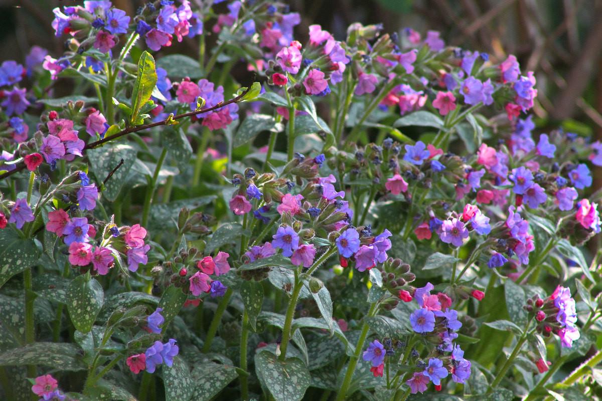 7 лучших растений для приствольных кругов дача,ландшафтный дизайн,сад и огород,цветоводство