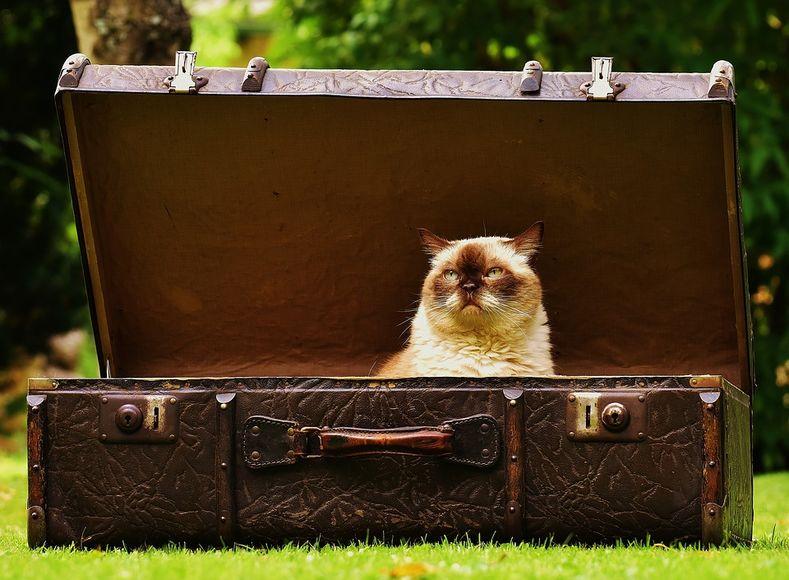 Как авиакомпании теряют ваш багаж авиатур,путешествие
