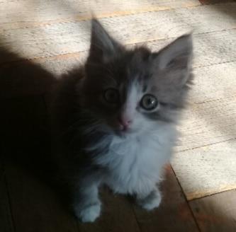 котёнок в доме
