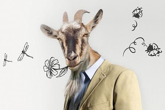 Смешные картинки про мужа козла, достатка дом