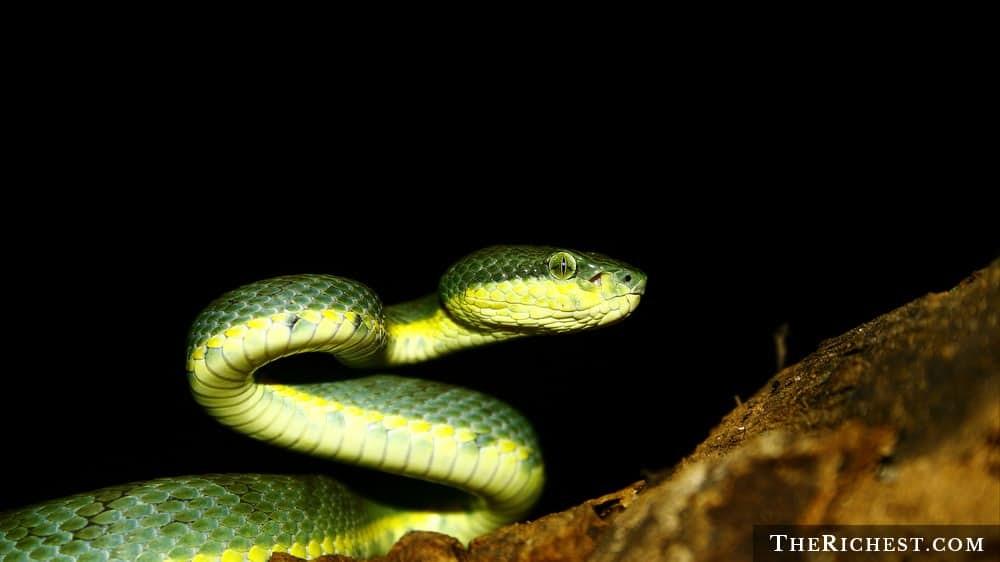 15 тревожных фактов о змеях,…
