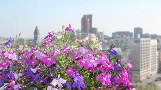 Растения для экстремальных условий на балконах