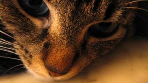Убитая горем кошка уже год н…