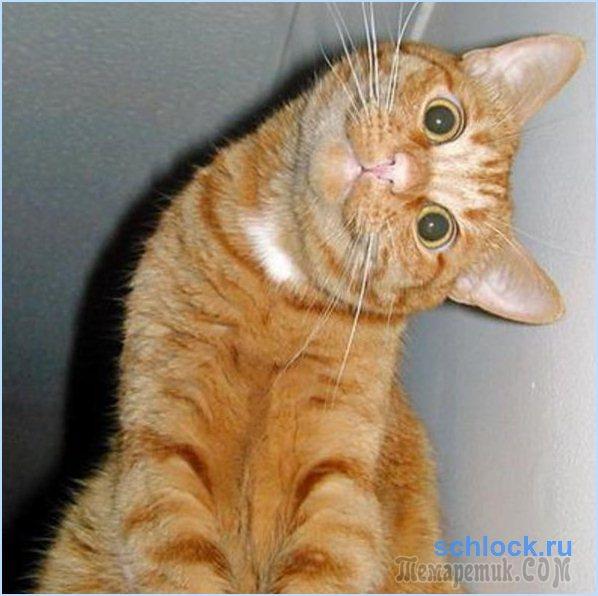 Как быть котом или наш ответ хвостатым