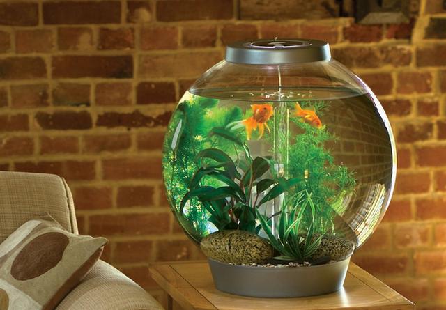Плюсы аквариума в доме