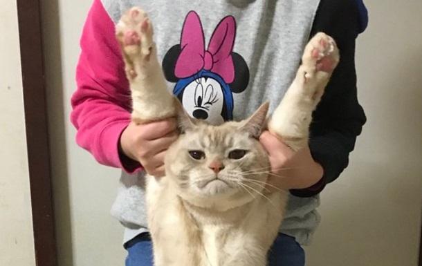 Растяни кота)))